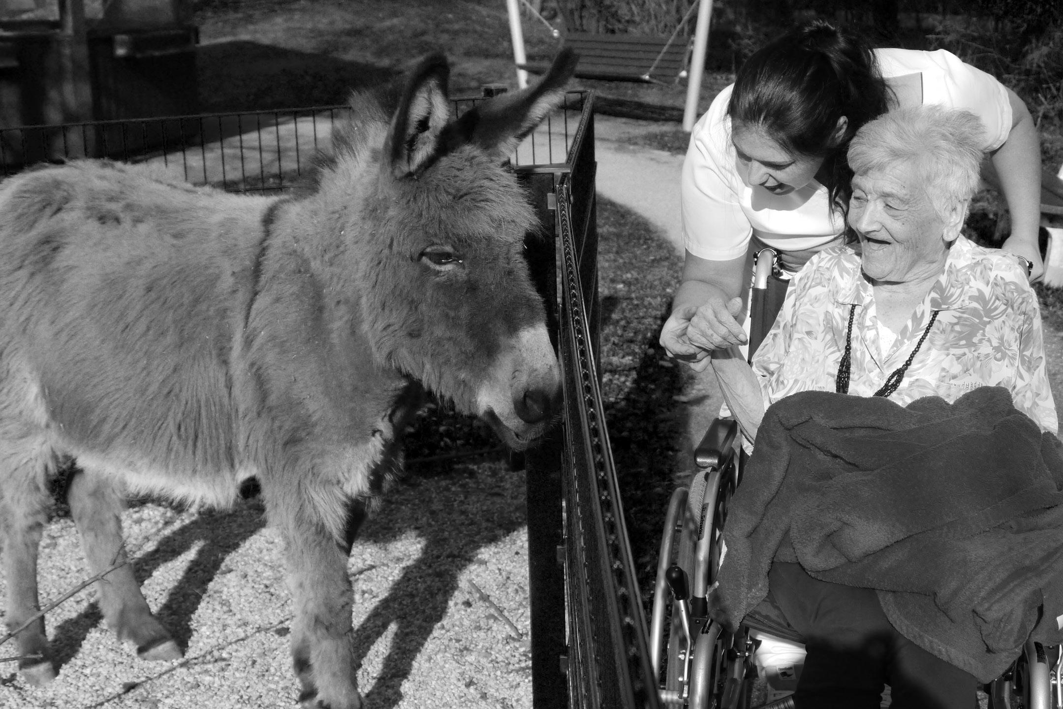 Retla_02A Projekt - Seniorin mit Esel